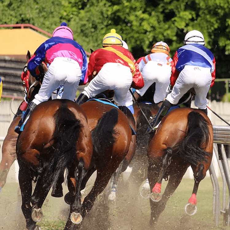 Meadowlands Races To Help Sports Betting Sites