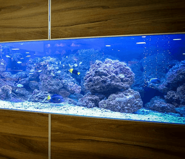 Casino's Smart Fish Tank Causes Issues